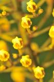 Serie macra 1 de la flor Foto de archivo libre de regalías