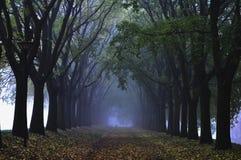Serie nebbioso di giorno ad una luce blu Fotografia Stock Libera da Diritti
