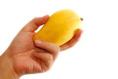 Serie tropical 5 del mango Imagen de archivo libre de regalías