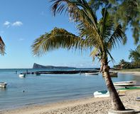 Serie tropicale immagini stock libere da diritti