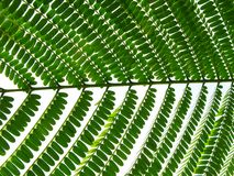 Serie van een groen blad royalty-vrije stock afbeeldingen