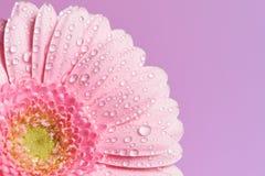 Serie van roze gerberabloem royalty-vrije stock foto