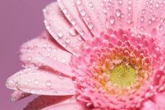 Serie van roze gerberabloem met waterdalingen stock afbeeldingen