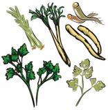 Serie vegetal de la ilustración ilustración del vector