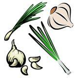 Serie vegetal de la ilustración Imagen de archivo libre de regalías