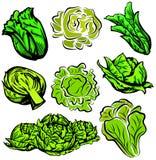 Serie vegetal de la ilustración Foto de archivo libre de regalías