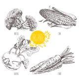 Serie - vektorfrukt, grönsaker och kryddor royaltyfri illustrationer