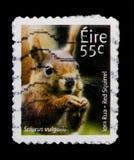 Serie vulgaris, ирландской животных и морской флоры и фауны 3-ее серии Sciurus красной белки, около 2011 Стоковое Изображение