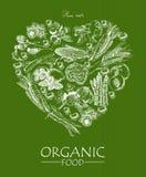 Serie wektorowa owoc, warzywa i pikantność -, Żywność organiczna menu Set warzywa, owoc i pikantność, Rolny posiłek plakat menu royalty ilustracja