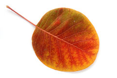 From a series: autumn leaf... Royalty Free Stock Photos