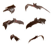 Series of bats Royalty Free Stock Photography
