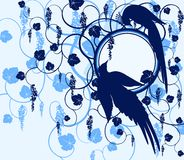 Series birds. Jay Royalty Free Stock Photos