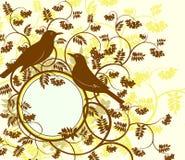 Series birds. Thrush. Stock Images