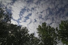 A series of clouds rushes the trees. A series of clouds rushes over the top of the trees Royalty Free Stock Photography