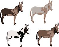 Series of donkeys various colors. Pets for agriculture  pets for agriculture Stock Images