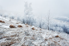 From the series Frosty morning Stock Images