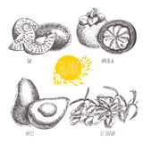 Series -  fruit, vegetables and spices. Hand-drawn illustration in vintage style. Stock Photography