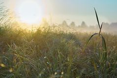 Series of landscapes autumn foggy morning Stock Photography