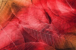 Series of leaf textures Stock Photography