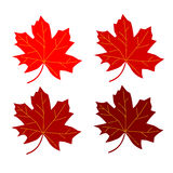 Series maple leaf red Stock Photos