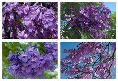 Flowering trees Mediterranean region Royalty Free Stock Image