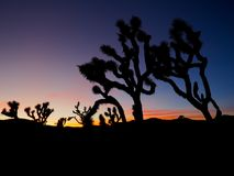 Joshua Tree California at Sunset. A series of photos of a late December sunset at the Joshua Tree National Park in California. Scenes include the iconic Joshua royalty free stock photo