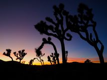 Joshua Tree California at Sunset. A series of photos of a late December sunset at the Joshua Tree National Park in California. Scenes include the iconic Joshua royalty free stock image