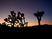Joshua Tree California at Sunset. A series of photos of a late December sunset at the Joshua Tree National Park in California. Scenes include the iconic Joshua stock photos