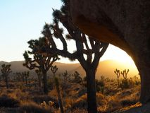 Joshua Tree California at Sunset. A series of photos of a late December sunset at the Joshua Tree National Park in California. Scenes include the iconic Joshua stock image