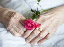 Hands of elderly lady with rose-series of photos Stock Images
