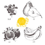 Series - vector fruit and spices. Hand-drawn illustration. Sketch. Healthy food. Royalty Free Stock Photography