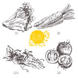Series - vector fruit and spices. Hand-drawn illustration. Sketch. Healthy food.  Stock Photography