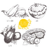 Series - vector fruit and spices. Hand-drawn illustration. Royalty Free Stock Photos