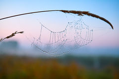 Series of the web in the autumn foggy morning Stock Photos