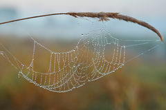 Series of the web in the autumn foggy morning Stock Image