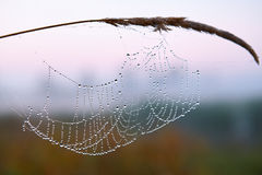 Series of the web in the autumn foggy morning Royalty Free Stock Images