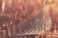 Series of the web in the autumn foggy morning Royalty Free Stock Photo