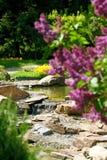 Sering in botanisch aan een tuin stock afbeeldingen