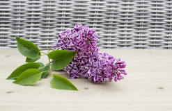 Sering flower on wooden background Stock Photo