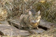 Serios cat portrait Stock Photos
