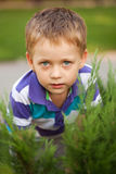 Serious blue-eyed little boy Royalty Free Stock Image