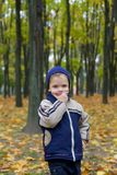 Serious boy in autumn Royalty Free Stock Image