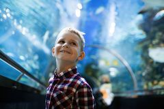 Serious boy looking in aquarium with tropical fish stock image