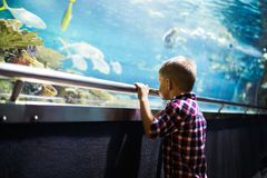 Serious boy looking in aquarium with tropical fish royalty free stock photos