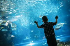 Serious boy looking in aquarium with tropical fish royalty free stock photography