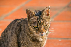 Serious Cat Foreground Royalty Free Stock Photos