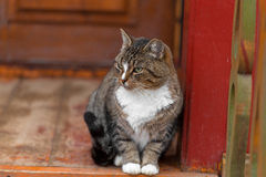 Serious cat on the porch in the street Stock Photo