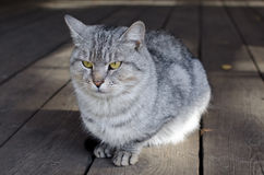 Serious cat is sitting on the front porch Stock Images