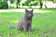 Serious cat Stock Image
