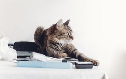 Serious cat sitting on table with work items, funny moment. cat. Freelancer at home. space for text stock photo
